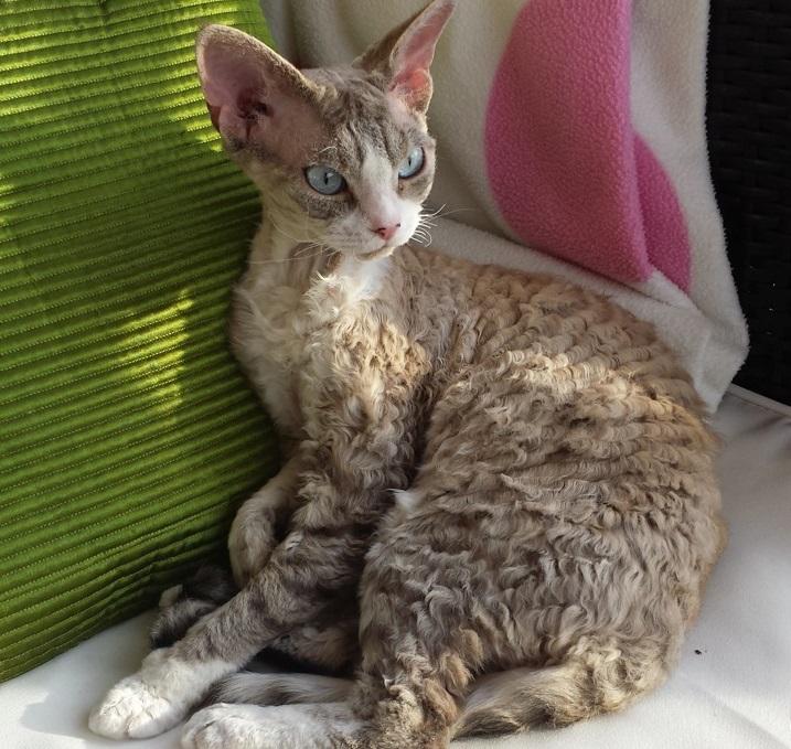 allergifri katt med päls